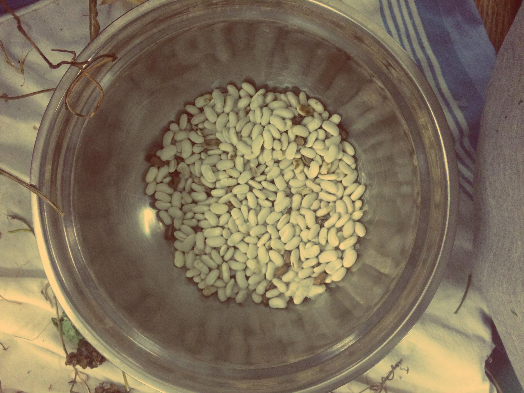 KASSI-Pole Beans