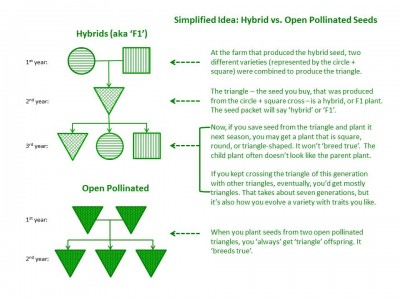 Hybrid vs OP