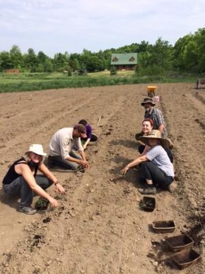 KASSI Community Seed Garden Report 2016